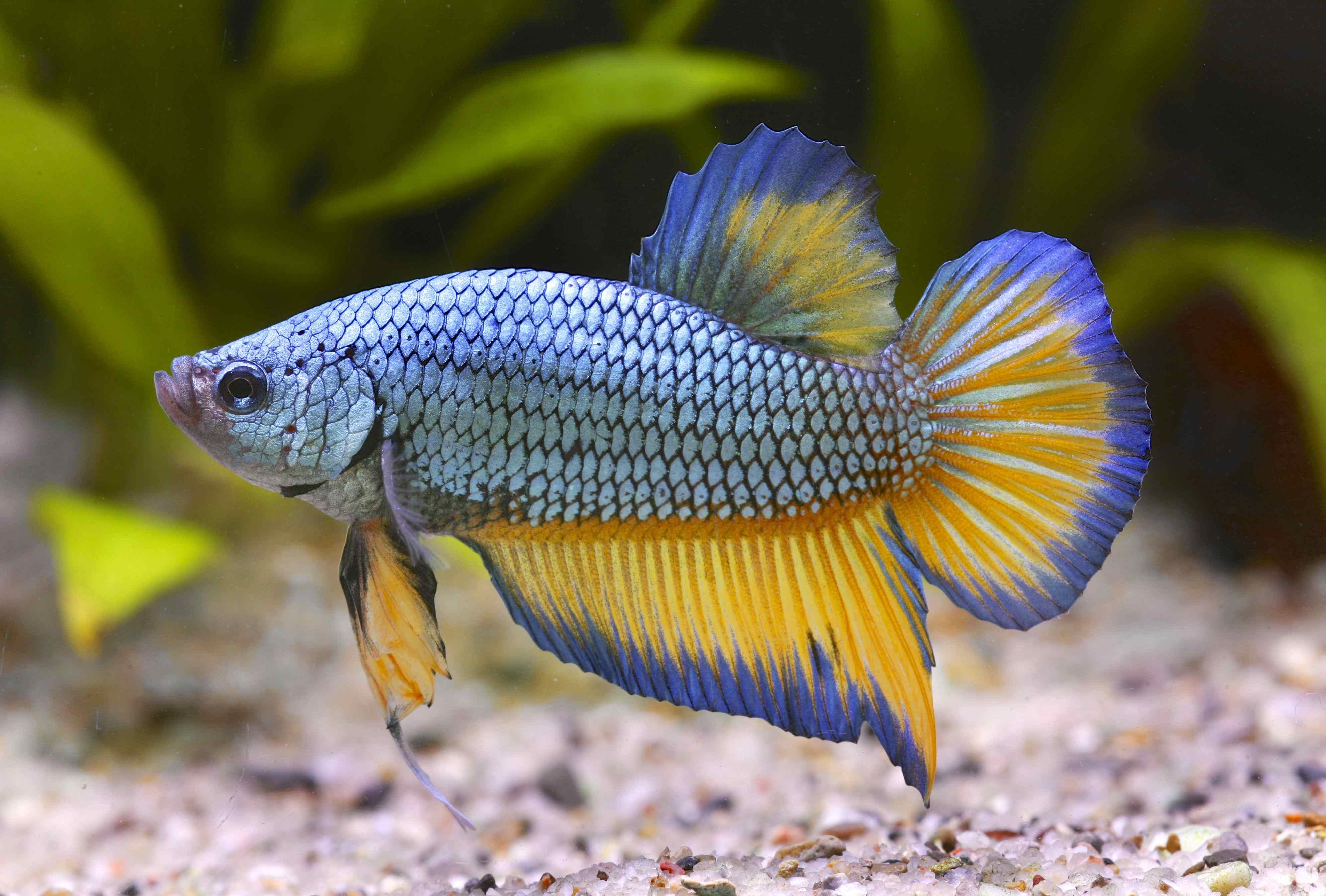 Cl10 zierfisch zentrum zierfisch zentrum for Zierfische aquarium
